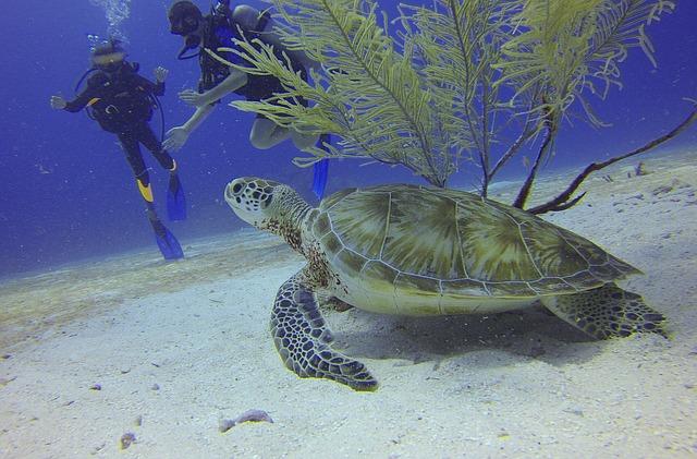 turtle Tipos de Mergulho em Bombinhas