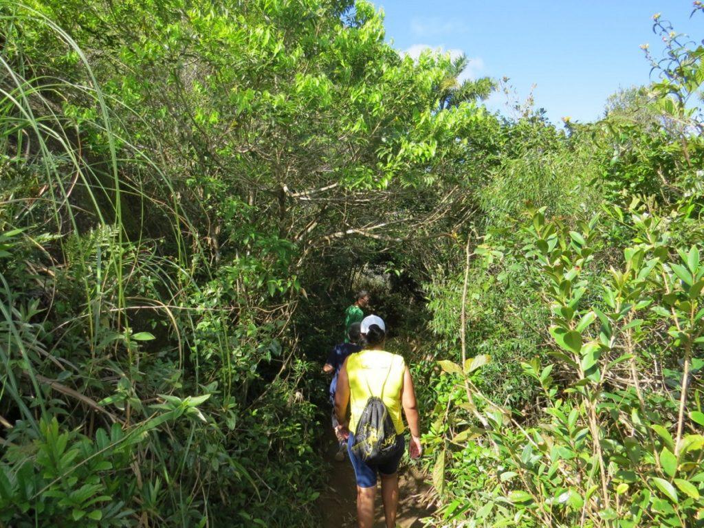 image4-2-1024x768 Conheça a Trilha do Morro do Macaco em Bombinhas